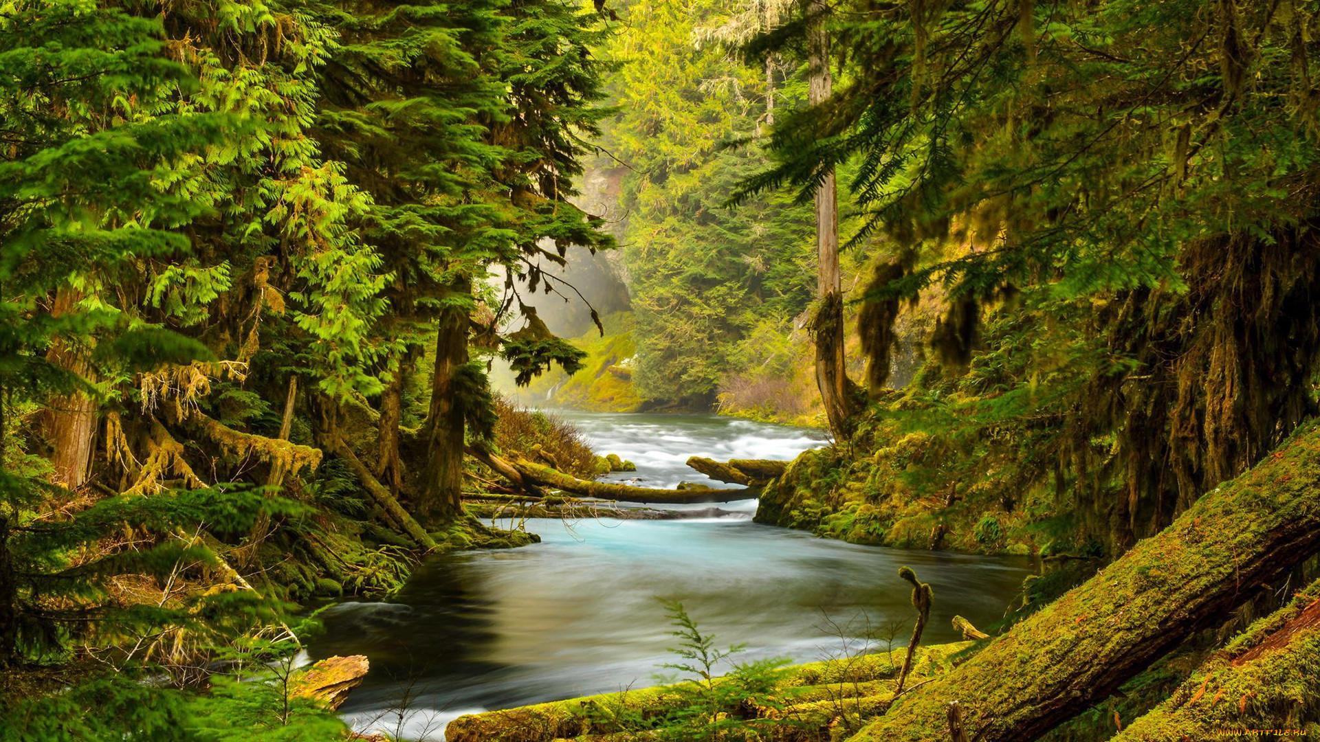 скотч картинки на рабочий стол речка и лес черт